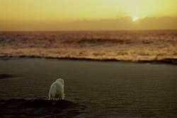 Hund genießt Strand und Sonnenuntergang