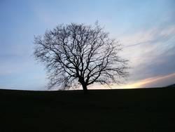 Baum um 16:30