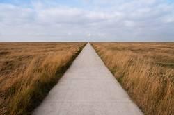 Freier Weg in den Salzwiesen