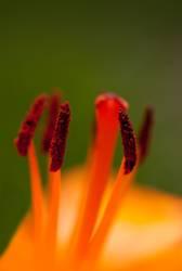 Rote Blüte ganz nah