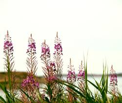 flowers at the sea