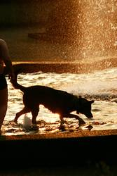 Hunde Sommer Bad