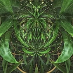 bamboo kobold