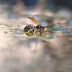 teichträume   schwimmflügelchen