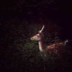 im schutz | der nacht