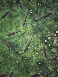 lebenselixier | frischer fisch