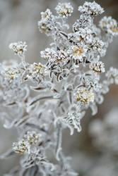 Ein Hauch von Frost und Winter
