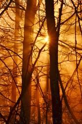 goldenes Abendlicht im Herbst