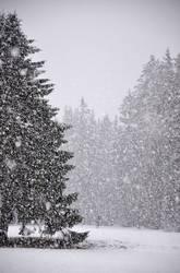 Schneetreiben, Mensch mit Schirm, ein Hund