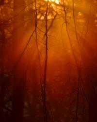 heiße Luft | Abendsonne
