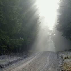Sonnenkraft bezwingt die Nebelbank