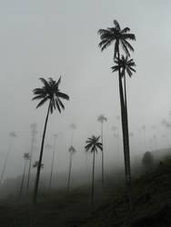 Palmenwald II
