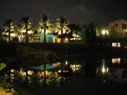 Beleuchtete Palmen