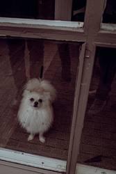 Schaufensterhund