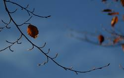 sonniger Herbst