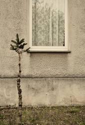 Weihnachtsbaum vor dem Stubenfenster