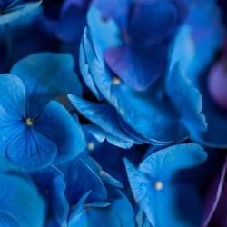 Ja ja so blau blau blau....