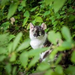 Katzenfotos gehen immer.