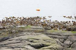 Landscape with buoy and kelp
