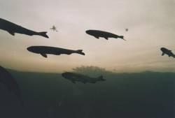 Der Tag der letzten fliegenden Fische.²