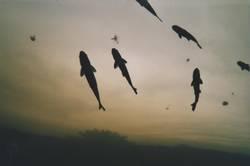 Der Tag der letzten fliegenden Fische.