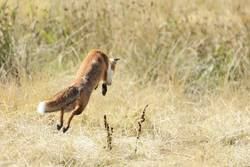 Fang die Maus - Fuchs-Darß