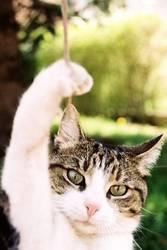 Cat Hangover