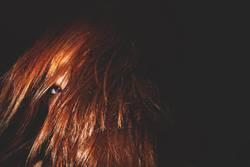 Gesicht im Haar