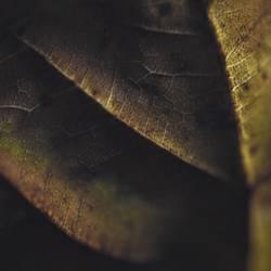 Herbstmakro I