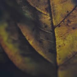 Herbstmakro III