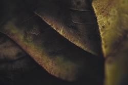 Herbstmakro II