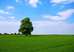 green pasture with lone standing tree