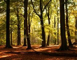 mystery autumn