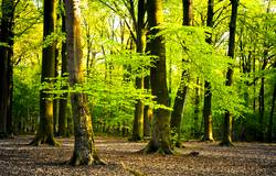 bright summer forest
