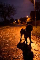 Novembernacht (2)