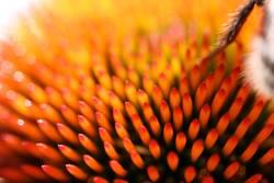 AUA-Flower