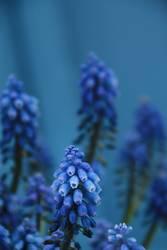 blau in blau
