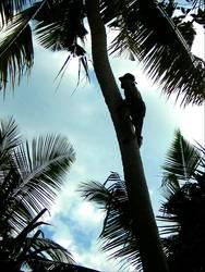 palmenkletterer
