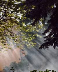 .Nebelschwaden