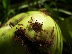 Ants paradise