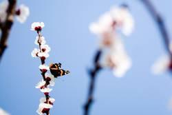 Frühlingsgefühle II