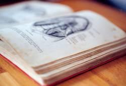 Anatomischer Atlas 02