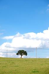 Hängt den Baum auf...