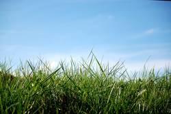 ...dem Gras beim wachsen zugucken