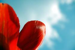 rote Frühlingsgefühle