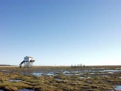lonely in StPeterOrding