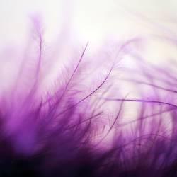 mein Winter ist violett