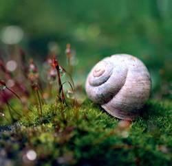 kleine verwunschene Welt