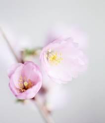 ein Hauch Frühling