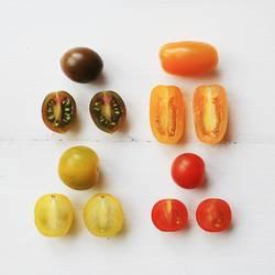Tomaten Quartett
